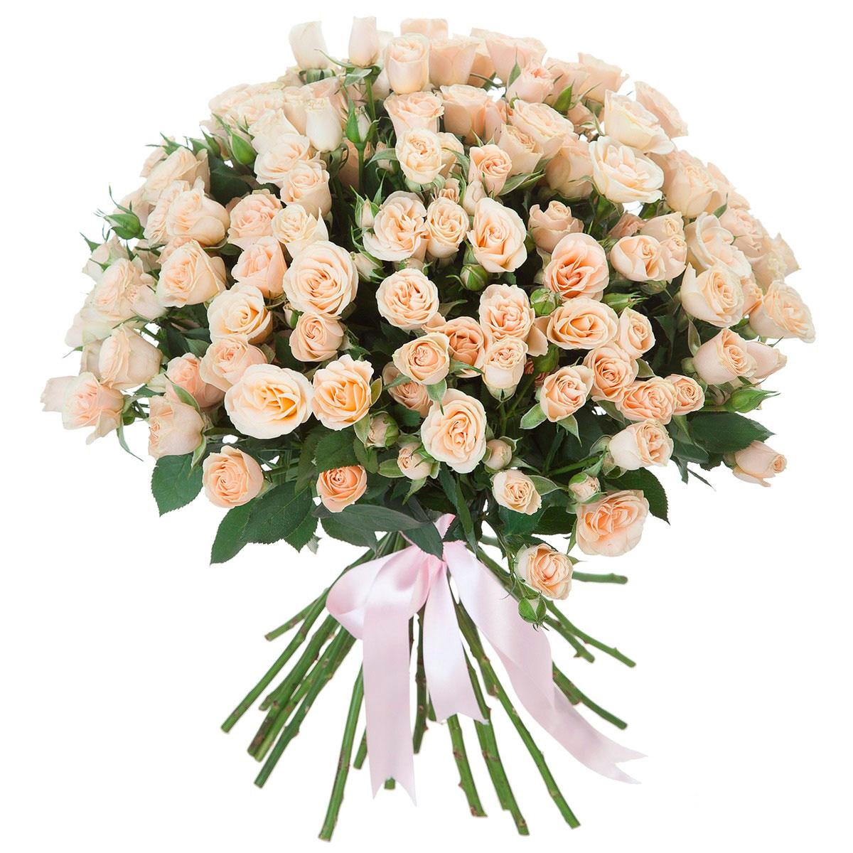 как выглядят кустовые розы фото огороде появилась
